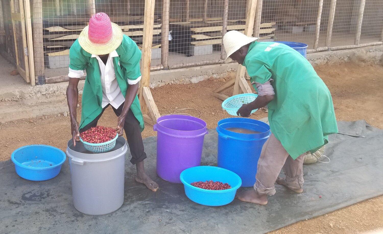 uganda-afrika-kaffee