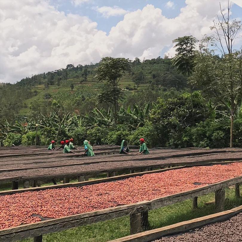 ruanda-kaffee-muhondo-washing-station-kaffeeberge-natural-trocknung