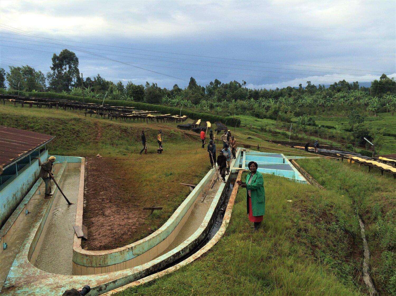 guama_washing_station_kenia_kaffee_woodgrouse